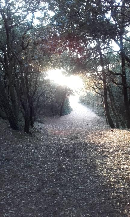 chemin-lumineux